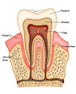 Sensitive Teeth 2